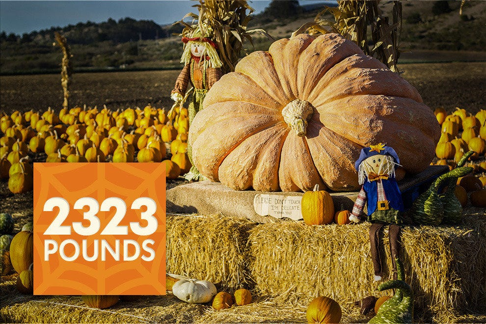 2,323 lbs. is the record-setting weight of the heaviest pumpkin ever.