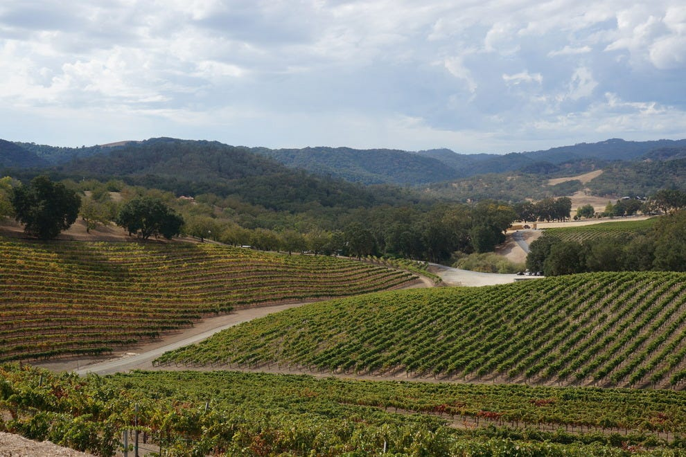 Rolling hills of vines, the grapes of which make wine for Opolo
