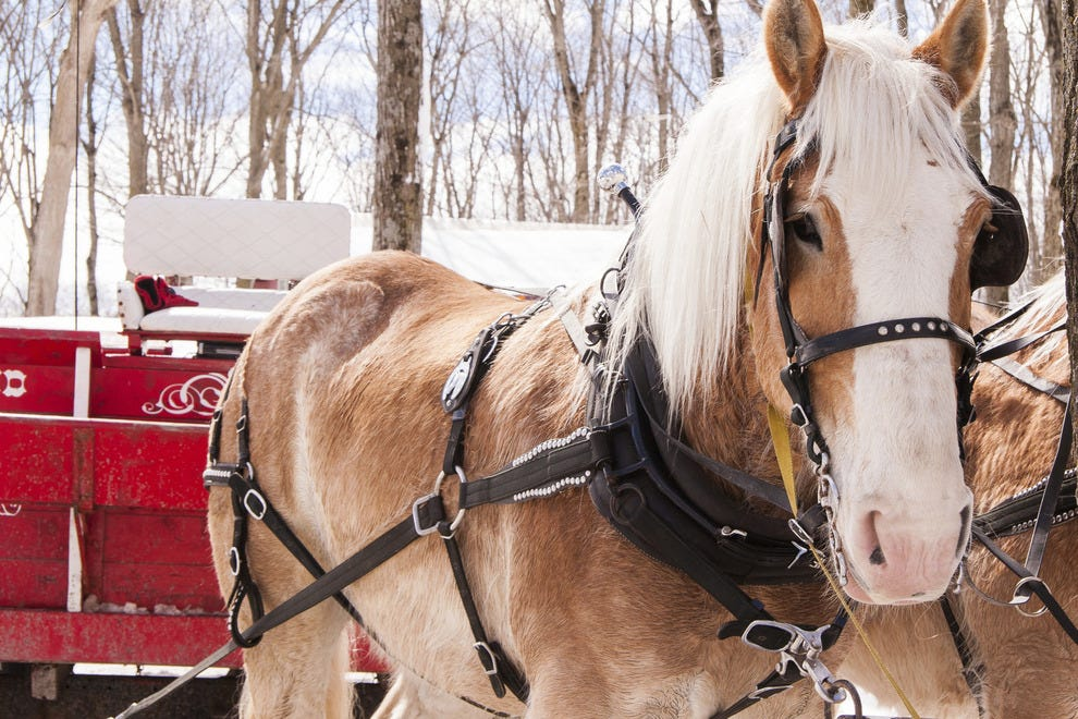 Nothing says Thanksgiving like a sleigh ride
