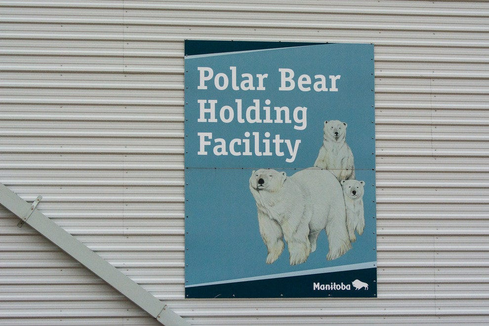 "Polar Bear ""Jail"""