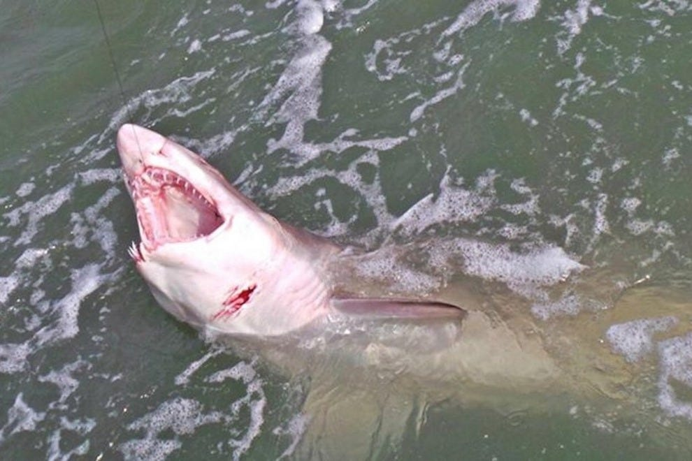 Would you fish for sharks on the space coast for Cape canaveral fishing