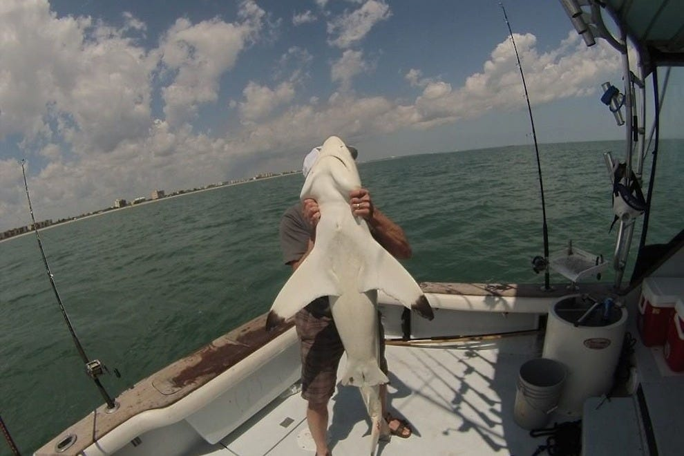 A shark caught by the charter