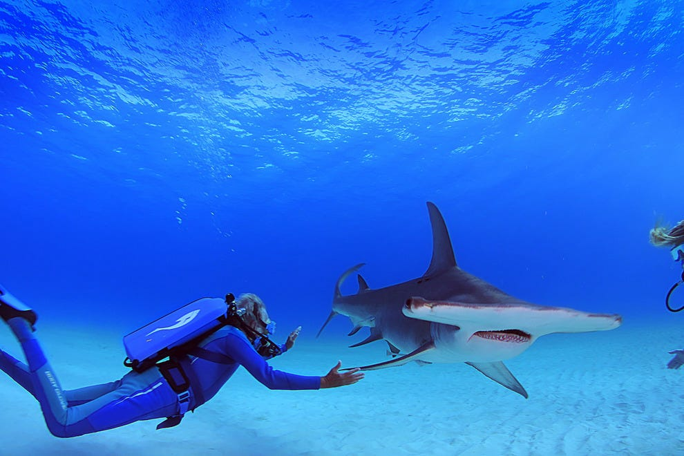 Jean-Michel Cousteau frolics with hammerhead shark