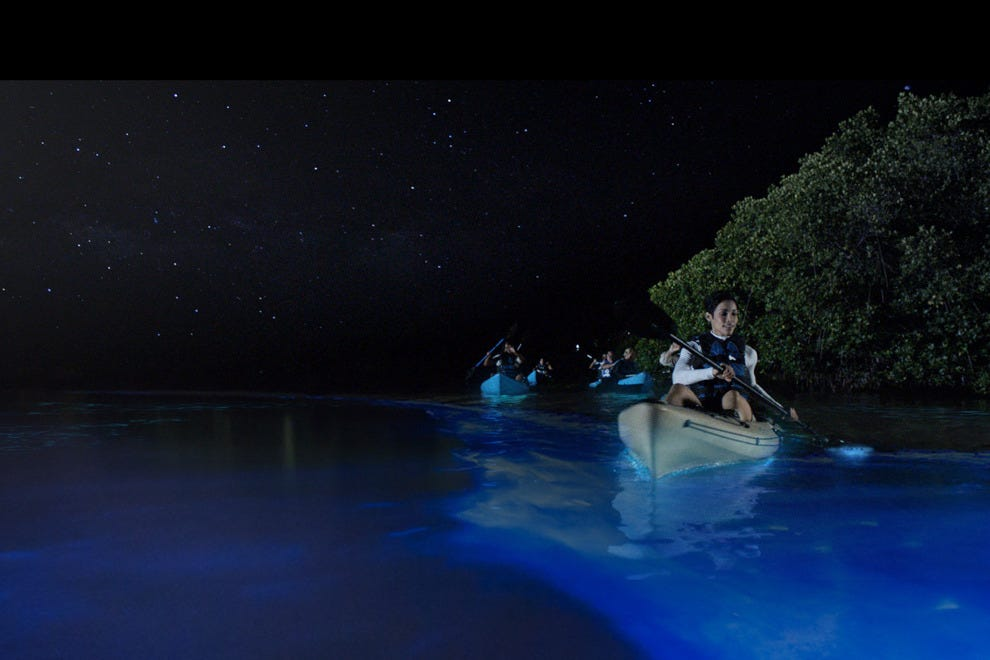 Best Bioluminescent Bay Tours Fajardo Puerto Rico