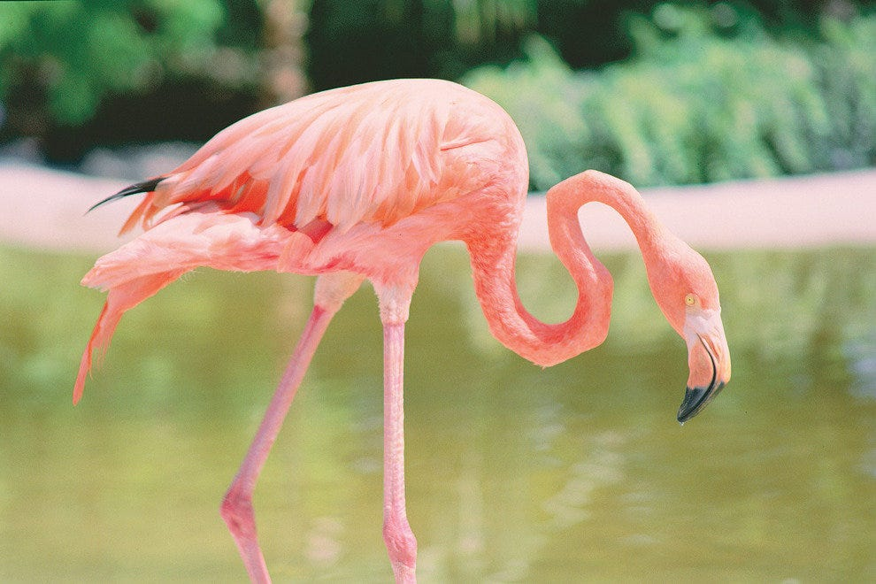 Coral Springs 39 Best Attractions Attractions In Fort Lauderdale