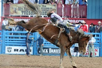Cowboy Up: Experience an Authentic Western Rodeo