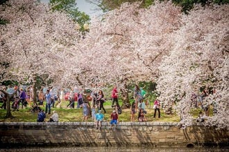 Shop Before the Buds Bloom At D.C. Festival's Store