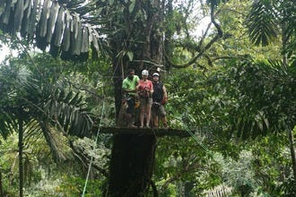Swing Along Treetops in an Adrenaline-Filled Jungle Adventure