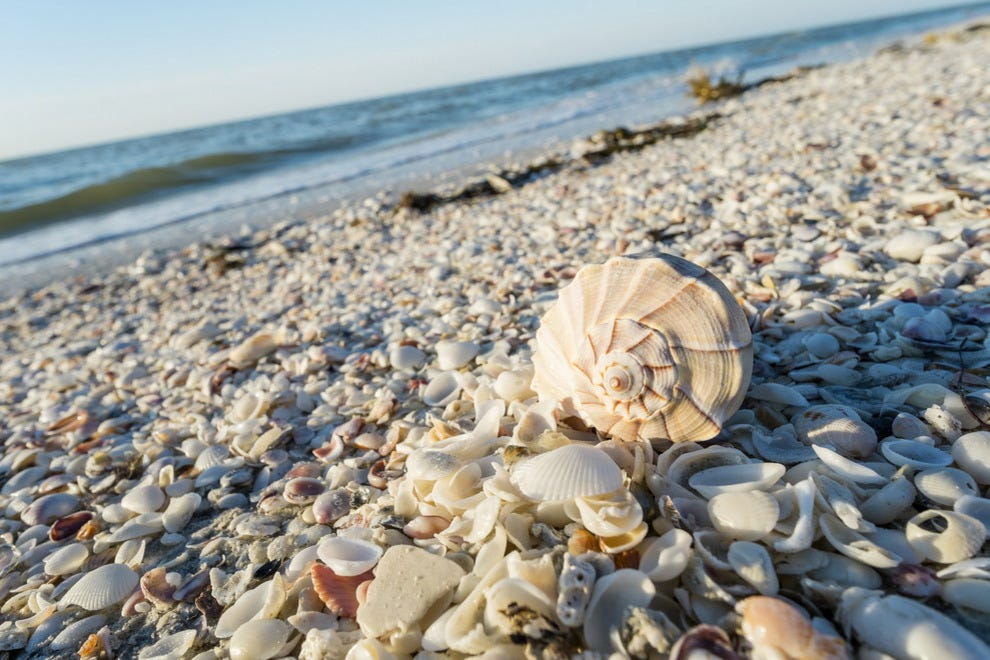 Top Florida Beaches For Shelling