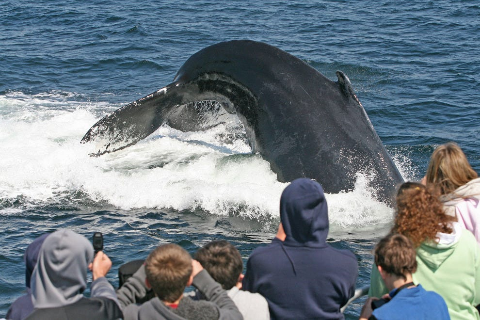 Stellwagen Bank National Marine Sanctuary