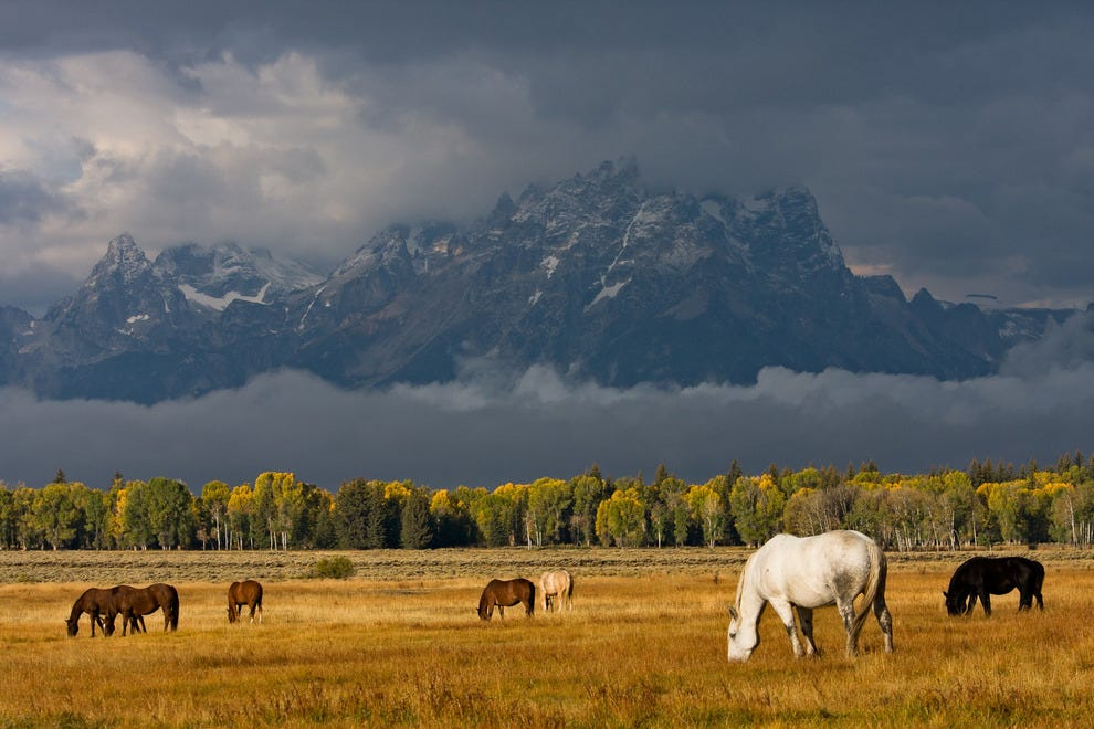 Grand Teton National Park is home to not only breathtaking views of the Tetons, but amazing wildlife opportunities as well.