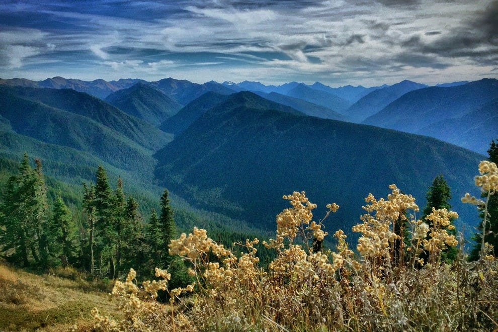 The Hurricane Ridge trail is a must-do, right near the visitor center.