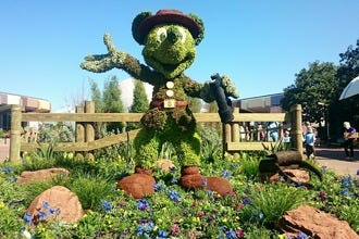 Flower Power: Walt Disney World's in Bloom