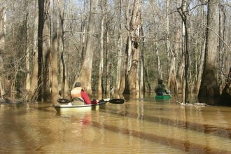 Wilderness Canoe Tours