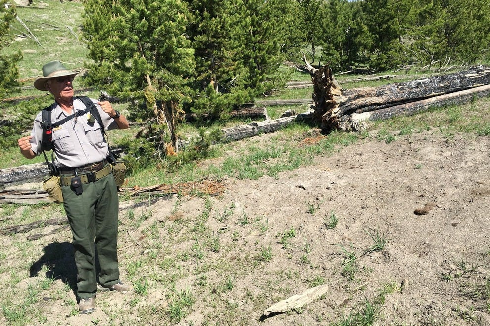 A ranger explains bison behavior in Yellowstone