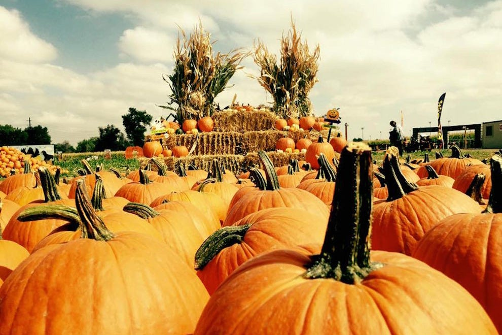 Maize in the City and Haunted Field of Screams offer Halloween fun for all ages