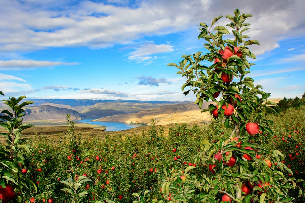 Delicious things await in Wenatchee and surrounding apple regions