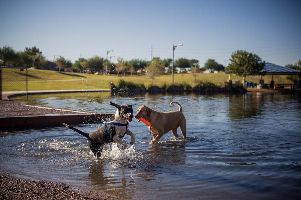 Best dog park winners 2016 10best readers choice travel awards cosmo dog park gilbert ariz solutioingenieria Gallery