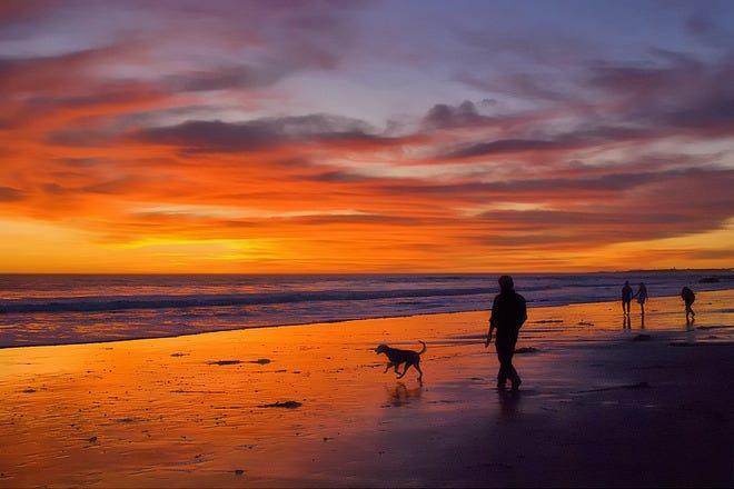 Best Friends Dog Park Hilton Head
