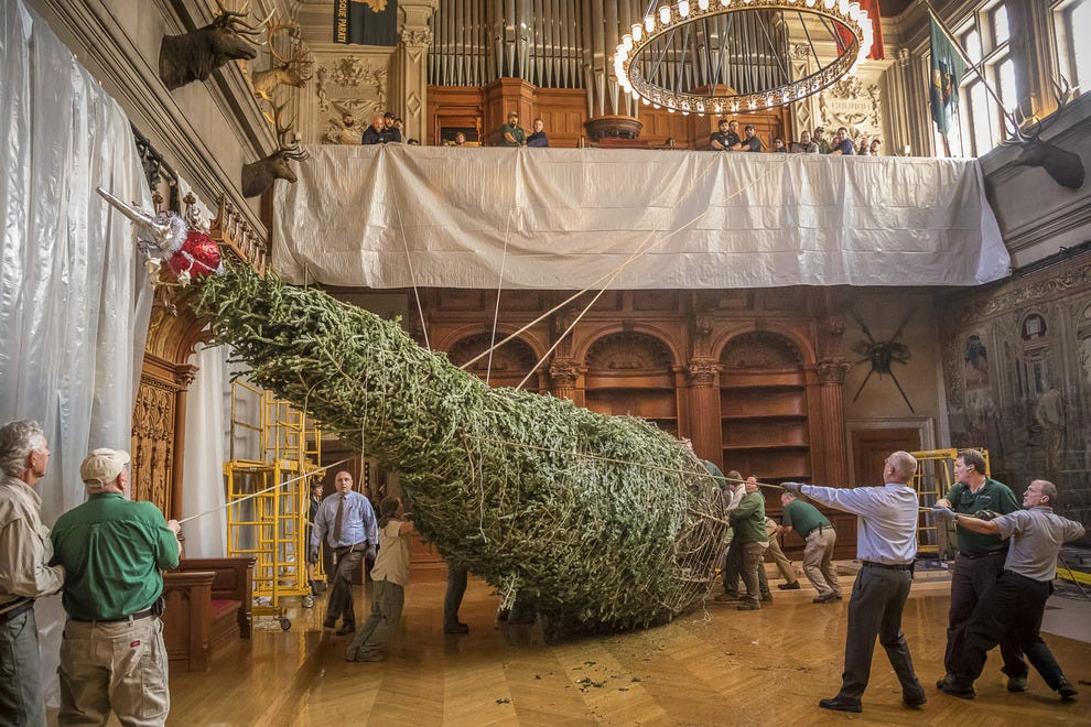 Watch as a Gigantic Tree Is Put up at Biltmore to Welcome the Holidays