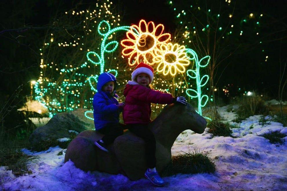 Electric Safari At The Cheyenne Mountain Zoo Colorado Springs