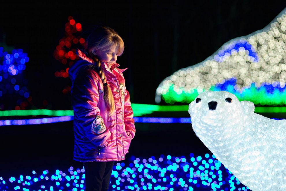 Wild Lights: Check Out These Holiday Zoo Events Near You