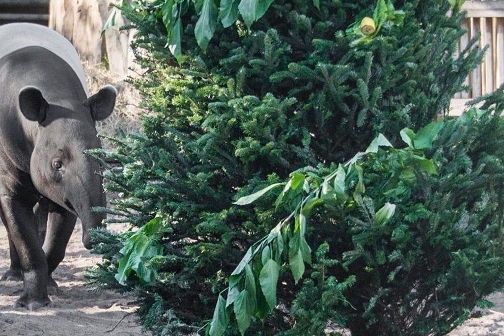 坦帕动物园的野外圣诞