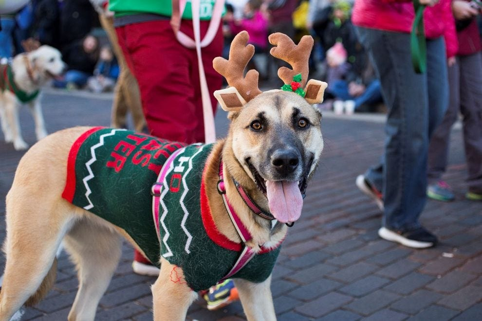 A costumed dog participates in the Reindog Holiday parade
