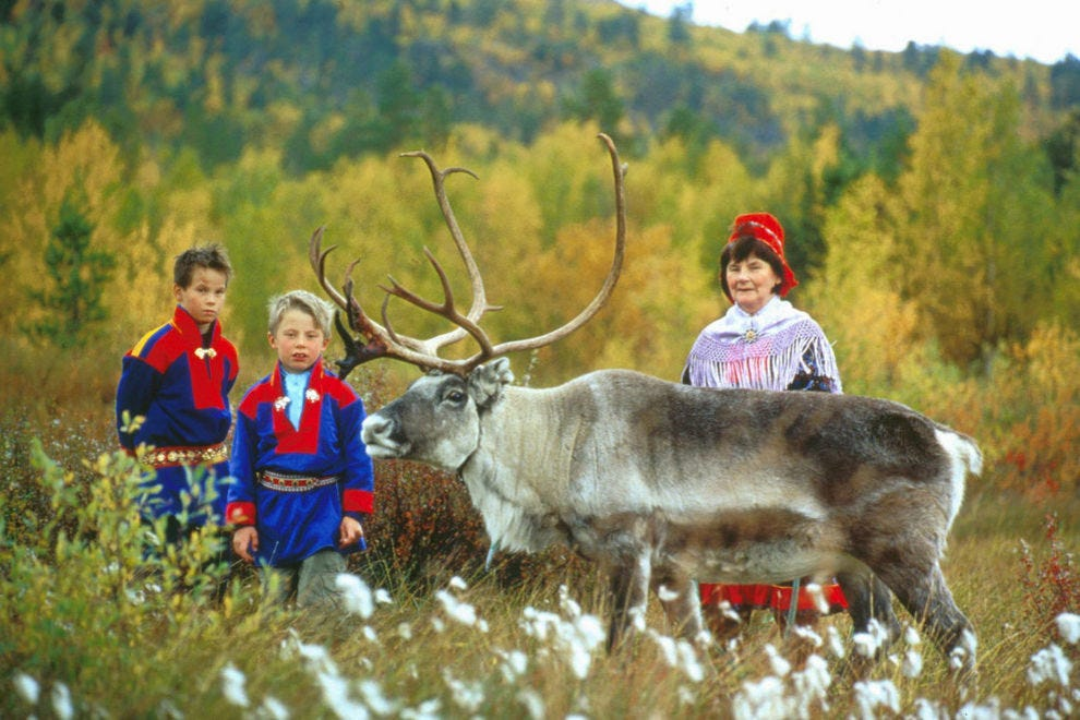 Visit reindeer owned by Sami in northern Norway