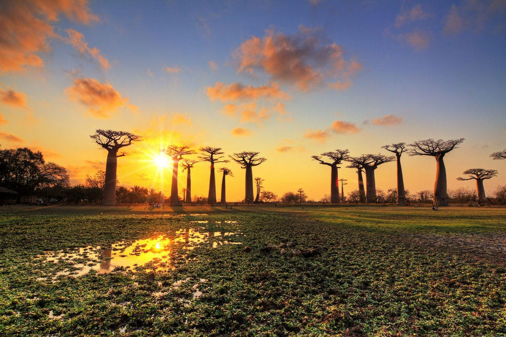 Avenue of the Baobabs in Madagascar