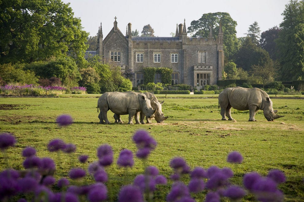 "These rhinos may not be ""to the manor born,"" but they and other endangered species call this home at Cotswold Wildlife Park"