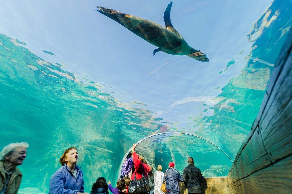 Best Zoo Winners: 2017 10Best Readers' Choice Travel Awards