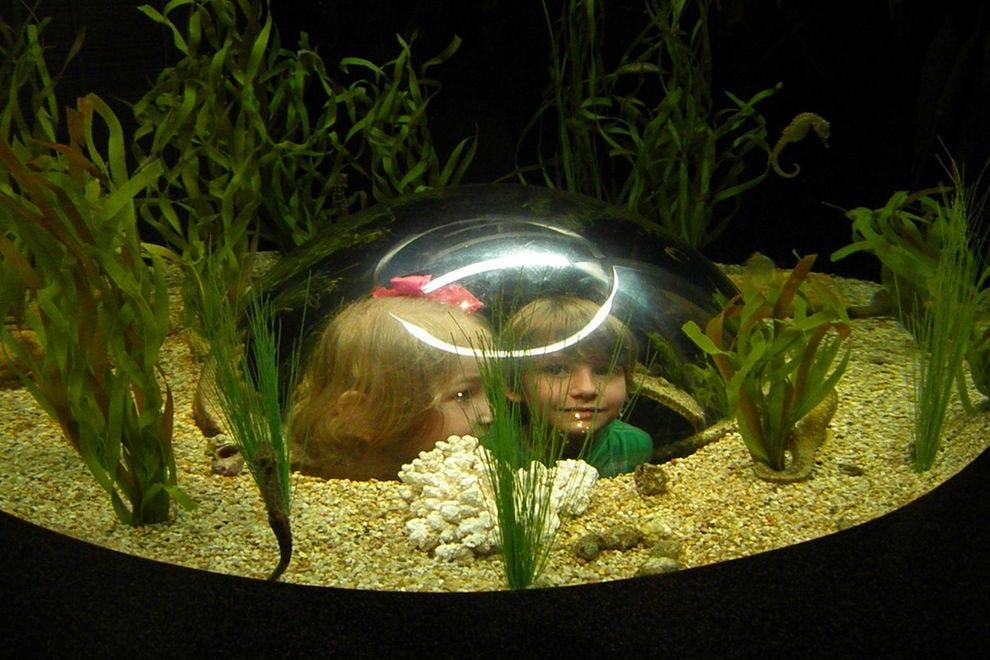 Best Aquarium Winners 2017 10best Readers 39 Choice Travel