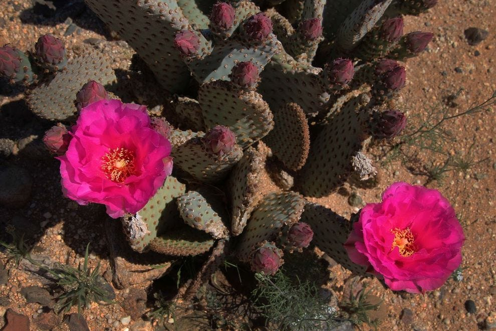 Check Out This Vibrant Cactus Bloom