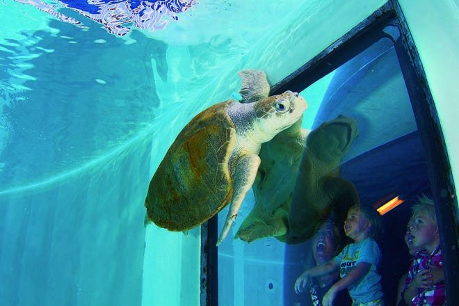 Clearwater Marine Aquarium: St  Petersburg / Clearwater