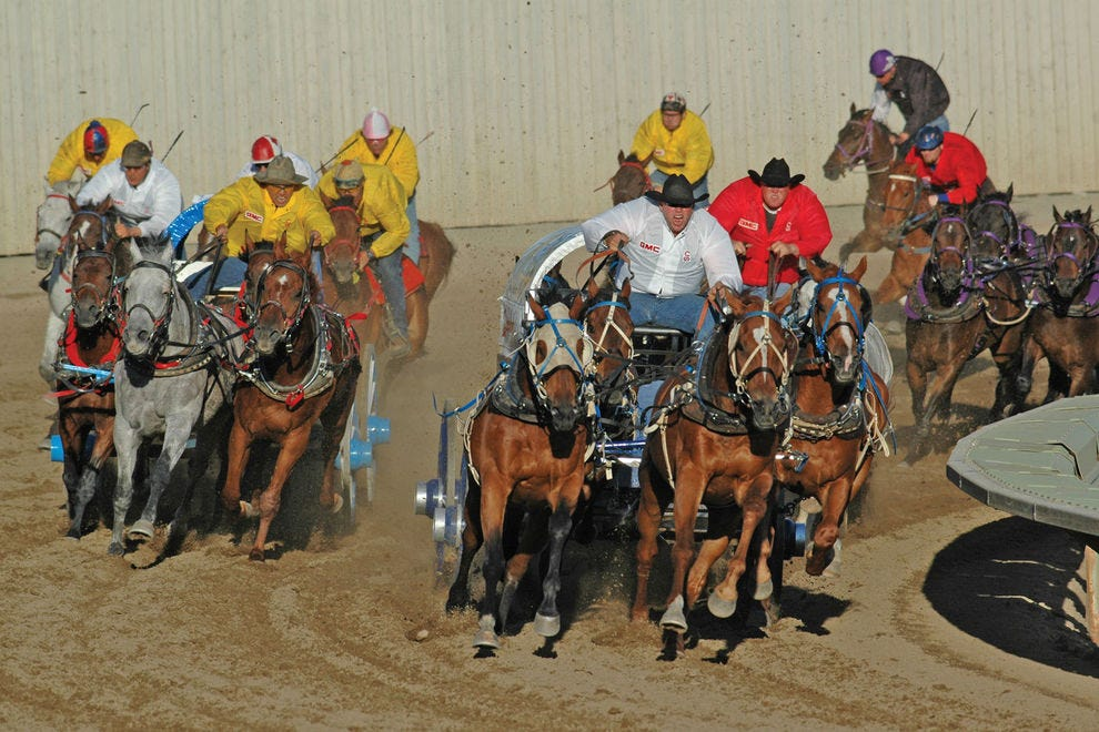 Many come to the Calgary Stampede specifically for the exhilarating chuckwagon races
