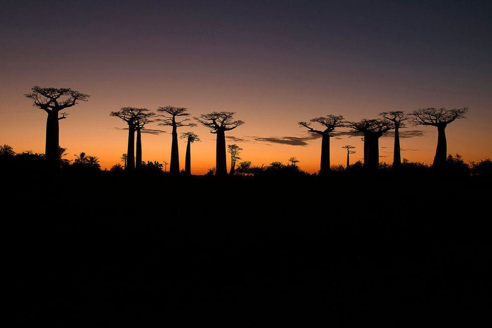 Sunset along the Avenue of the Baobabs