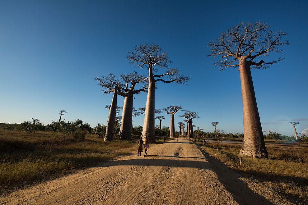 Life along Avenue of the Baobabs