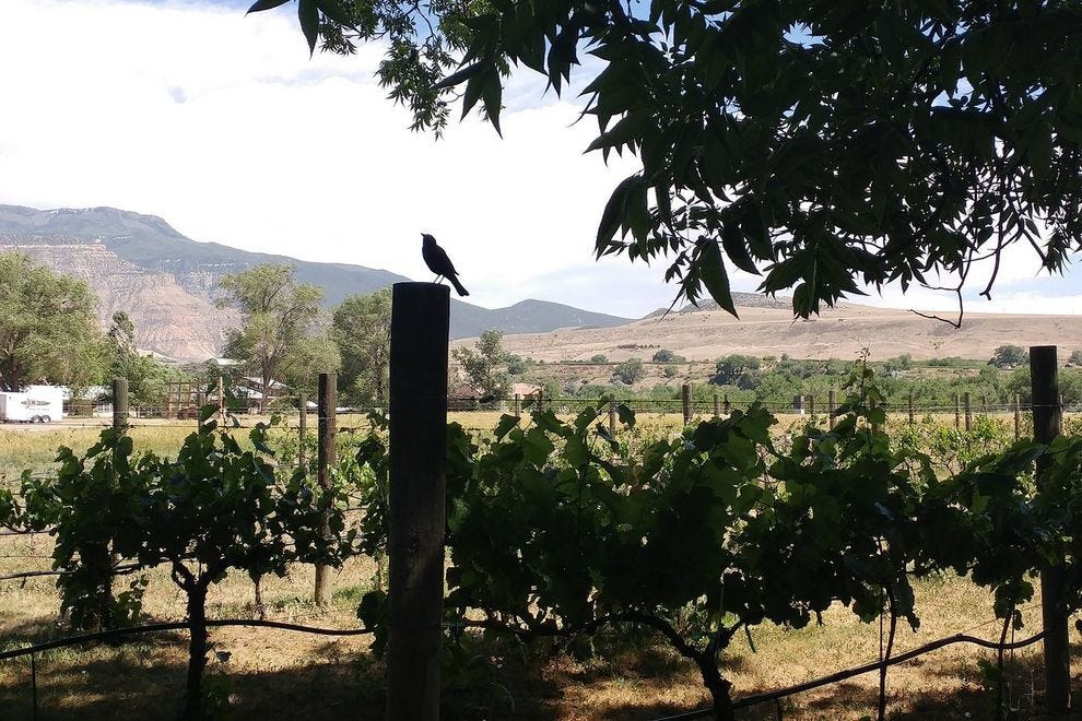 The birds and the bees enjoy the vineyard out back at the Meadery of the Rockies