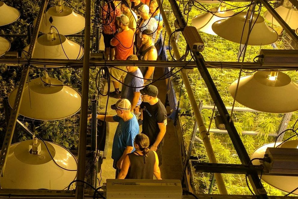 Participants explore a state-of-the-art cultivation facility on one of My 420 Tours' offerings