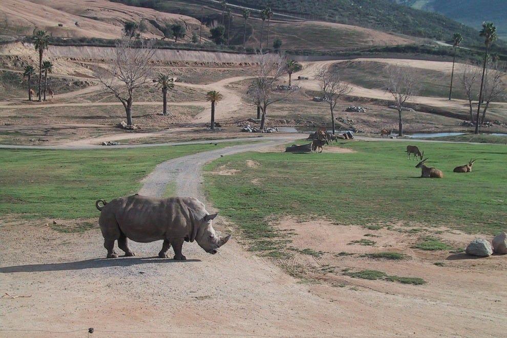 San Diego Zoo Safari Park Animals San Diego Zoo Safari Park