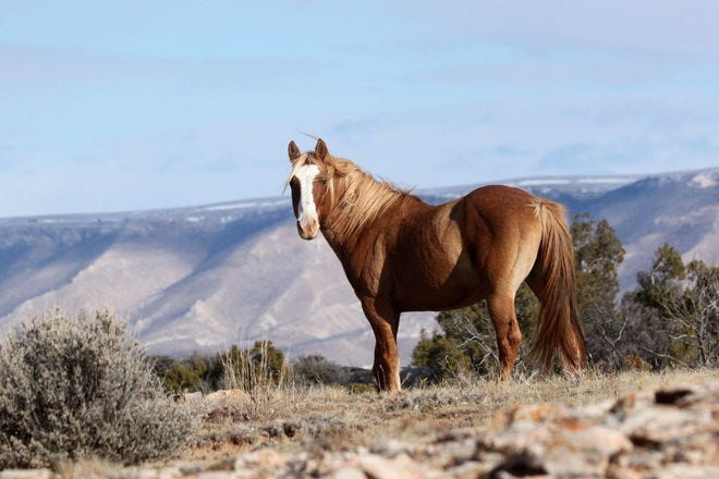 See wild horses that still run free in Wyoming - travel-tips