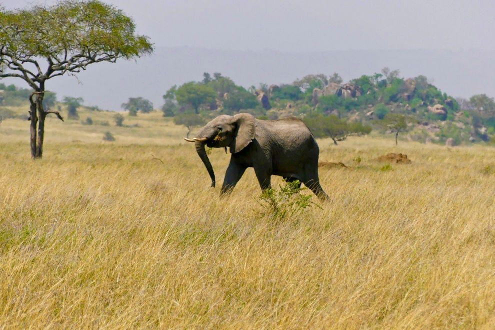 Moru Kopjes lies in the southwest of central Serengeti, one of the park's most beautiful regions
