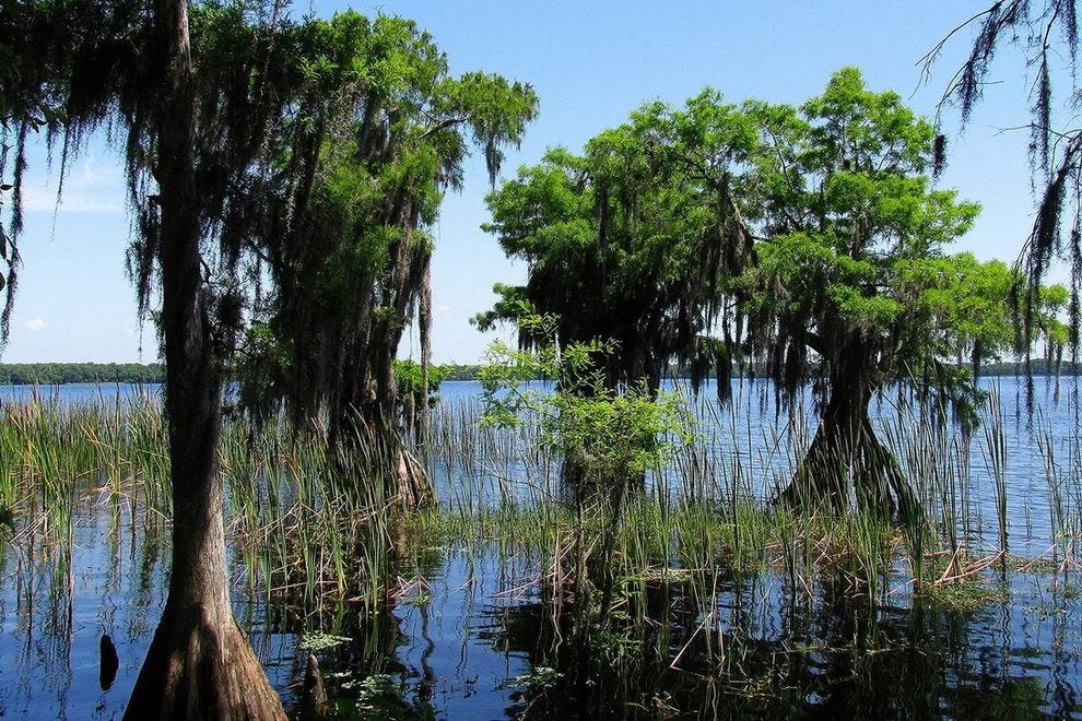 The Nature Conservancy's  Disney Wilderness Preserve