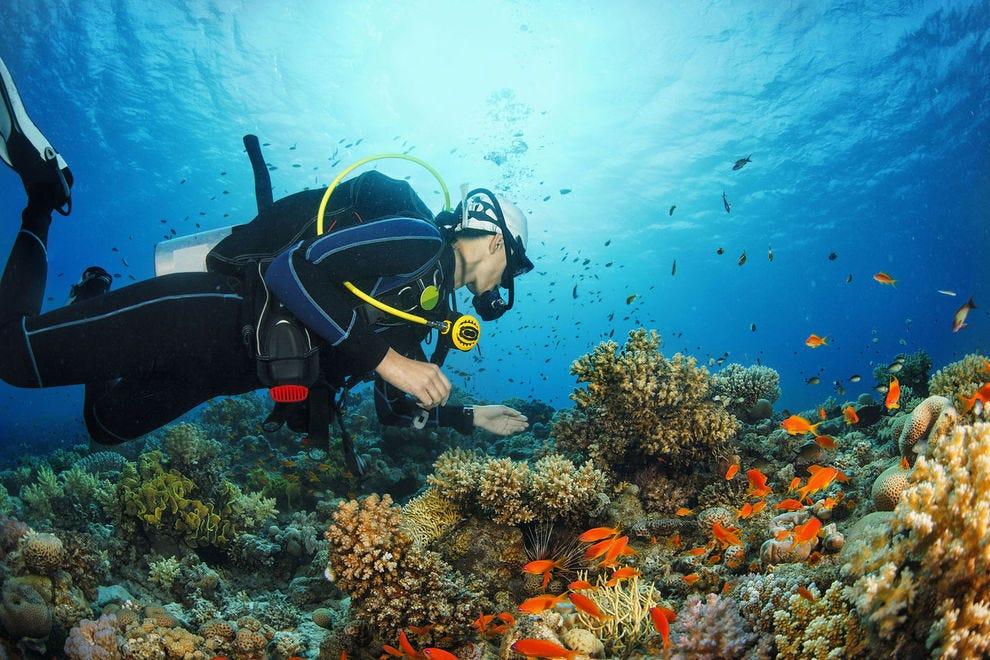 Best Caribbean Dive SIte Winners: 2018 10Best Readers