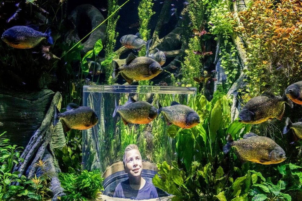 Wonders of Wildlife brings a new aquarium experience to Springfield