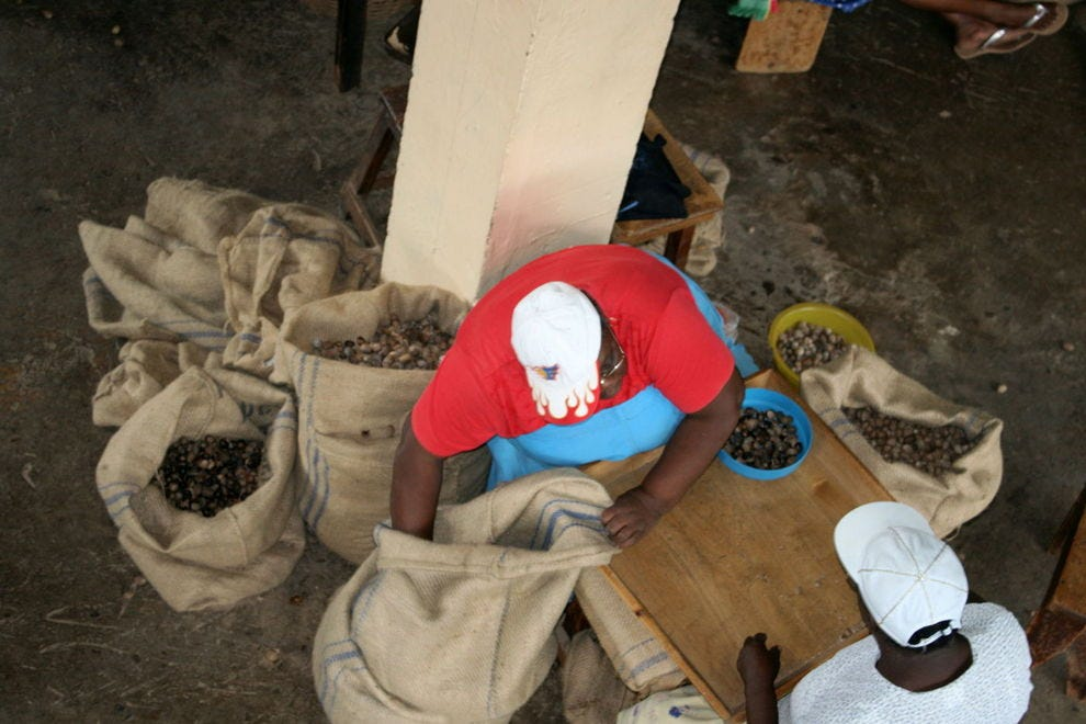 Sorting nutmeg at the processing plant