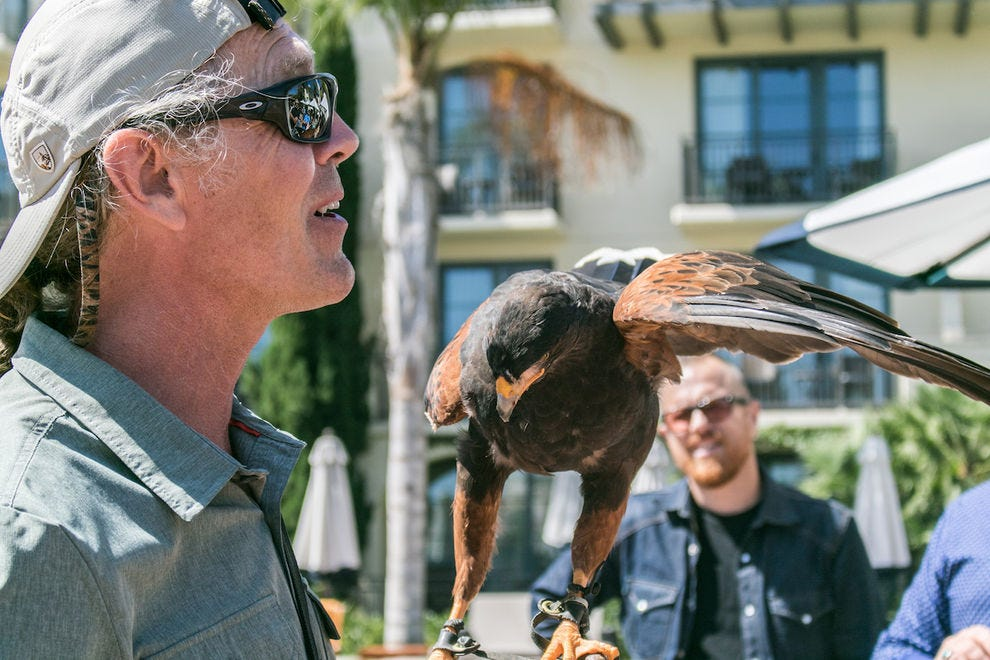 Falconer Joe Roy III teaches guests about birds of prey at Terranea Resort