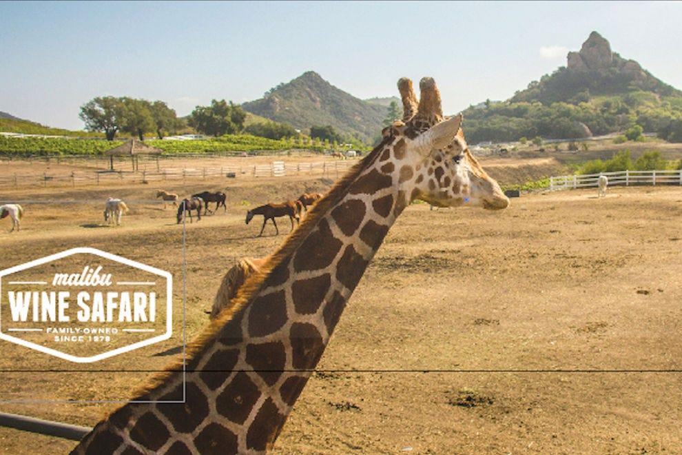 Malibu Wine Safaris Los Angeles Attractions Review
