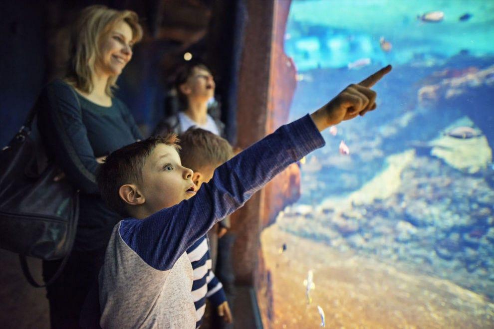 Best Aquarium Winners: 2018 10Best Readers' Choice Travel Awards